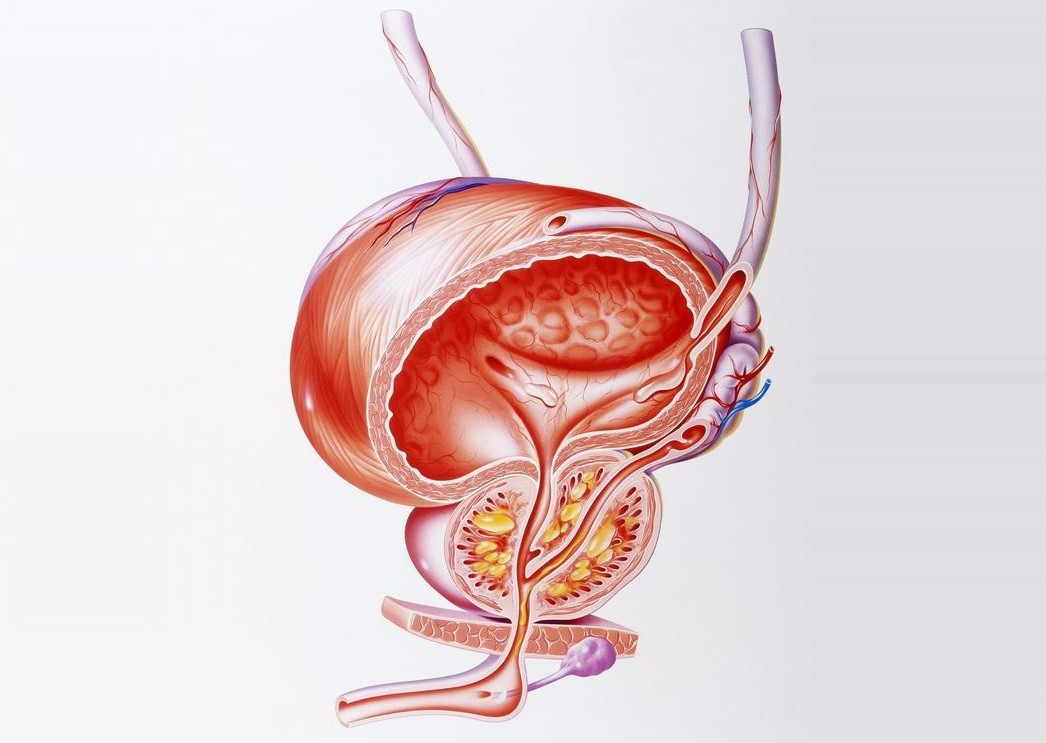 得了前列腺炎对男性身体的危害是什